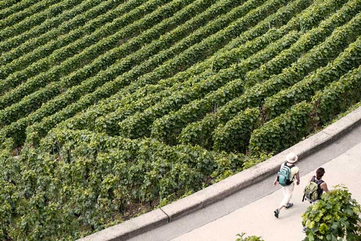 Visite guidate in cantine e aziende vinicole del Veneto, Sfusi ma Buoni